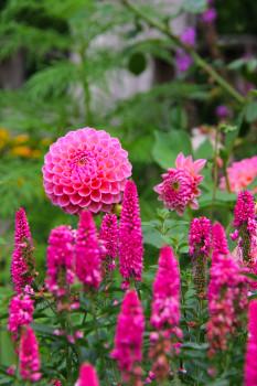 Fuscia Florals