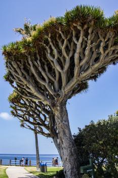 Inverted Tree