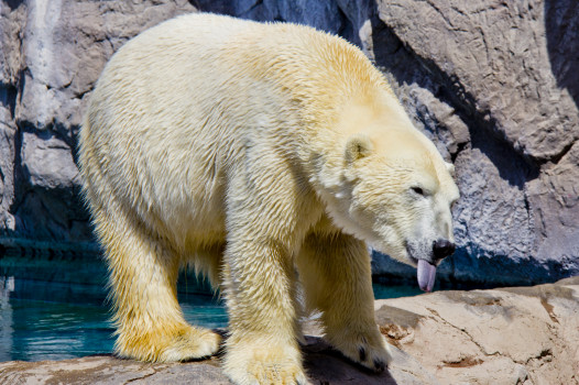 Playful Polar