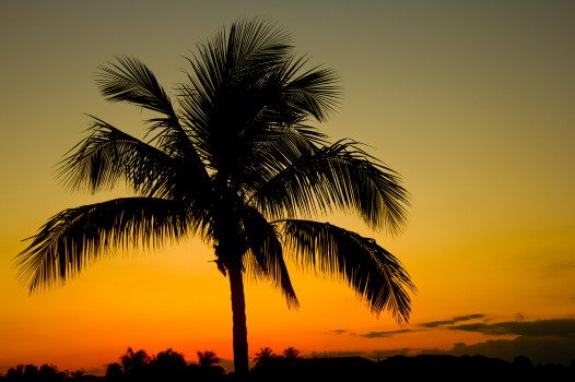 Silhouette Palm